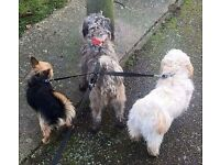 Dog walking /pet sitting service in and around the Great Yarmouth area