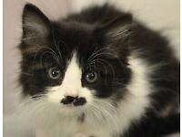 Beautiful fluffy kittens !!