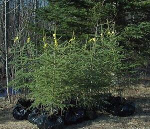 Tree Farm -- Turnkey operation: Inventory, equipment, house, accounting system, web page, good will, 1 yrs help.