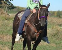CUTTING/REINING COW HORSE PROJECT.