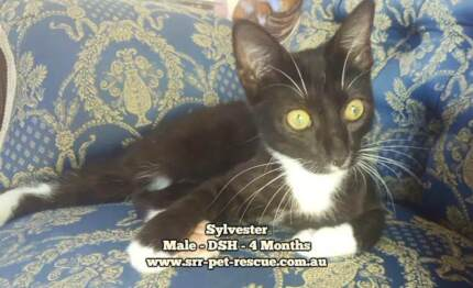 Sylvester - Soquilichi Rescue