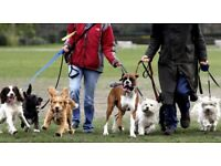 Stockport dog walker