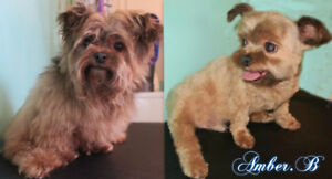 Dog Grooming In Nw Bowness