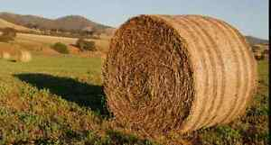 Hay and Greenfeed for Sale