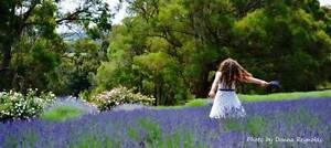 Lavender Farm, Cafe and Gift Shop Mount Egerton Moorabool Area Preview