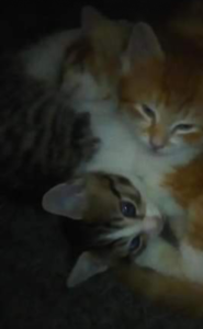 Cheap kittens