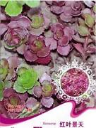 Sedum Seeds