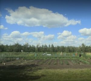 Community Garden Plots for Rent