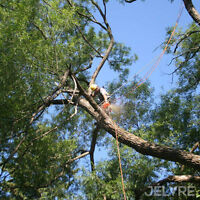 Élagage, émondage, abattage d'arbres