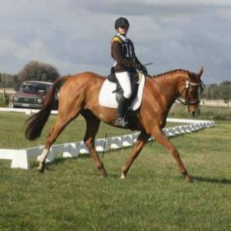 Need help? Cranbourne Casey Area Preview