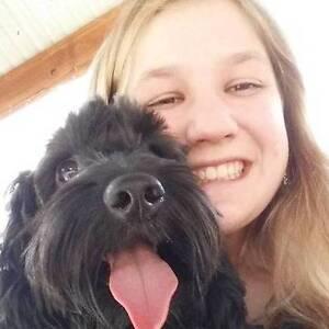 Alexandra Mad Paws Pet Minding Windsor Stonnington Area Preview