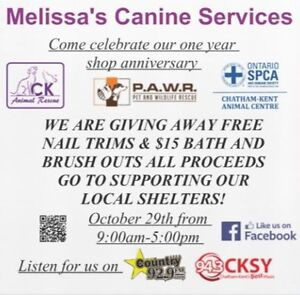 DOG RESCUE FUNDRAISER IN TILBURY