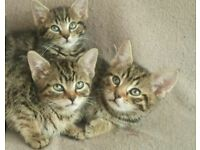 LOVELY KITTENS READY TODAY