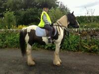 Horse livery available