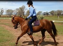 Great Allrounder Pony Oakey Toowoomba Surrounds Preview
