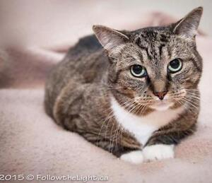 "Adult Female Cat - Tabby: ""Betty Boop"""