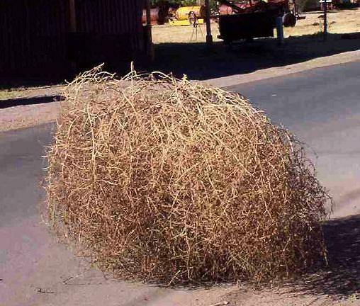 Gigantic Country Tumbleweeds