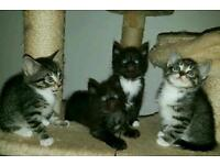 4 beautiful kittens ready to go now.