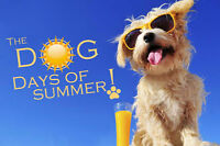 Wizard OF Pawz Dog Grooming - Dog Days of Summer are here!!