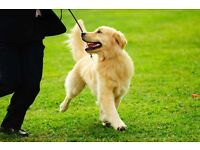 Pet Sitter in York South Bank area: experienced, licensed, insured, reasonably priced + references.