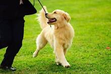 """Hit the road with a """"Woof!"""" - Dog walking and more Berwick Casey Area Preview"""