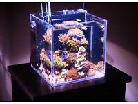 Complete marine fish tank set up & extras!!!
