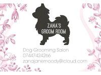 Trainee dog grooming