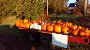 pumpkins for sale Peterborough Peterborough Area image 1