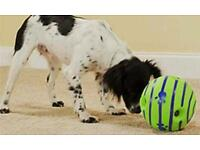 Wobble wag giggle dog ball - New