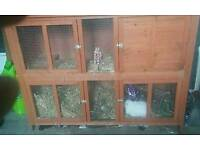 rabbit hutch rabbit and rabbit cover