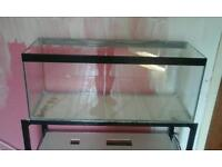 3 foot clear fish tank