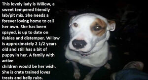 Willow is looking for her Furever home