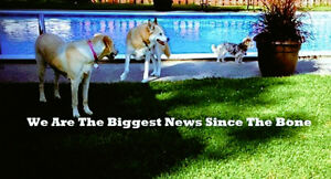 Chris's Dog Hotel No Cages | Biggest News Since The Bone