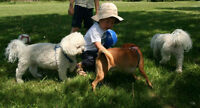Dog Sitting / Dog Daycare and Dog Boarding for Small Dogs