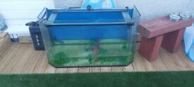 Fish tank and filter 310 litres