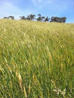 Wanted: Do you have too much grass? Paddock wanted to slash/cut for hay
