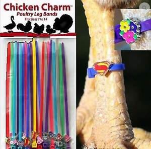Charm Leg Bands are here along with heaps of chickens and ducks Herne Hill Swan Area Preview