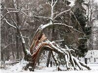 Tree Surgery - Snow Damage