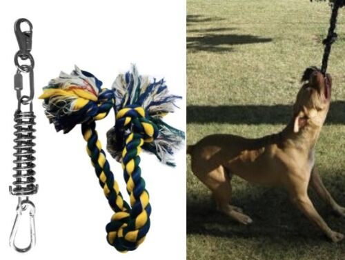 (1) -Bully Spring Pole! Conditioning FUN Muscle Builder & Tug Dental Hygene Rope