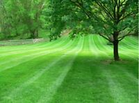 Booking lawns for summer 2017!