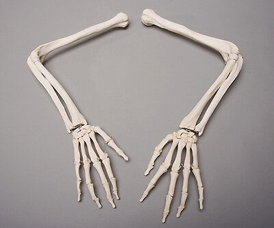 Halloween Horror Skeleton Arms Life-Size Human, Left & Right, NEW