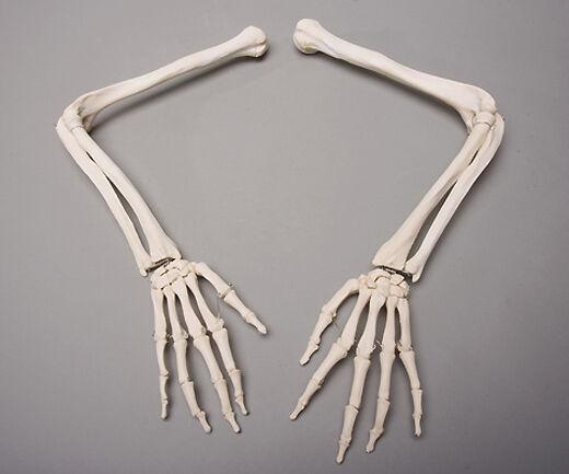 halloween horror skeleton arms life-size human left & right | ebay, Skeleton