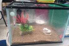 2 FISH TANKS MUST GO Redwood Park Tea Tree Gully Area Preview