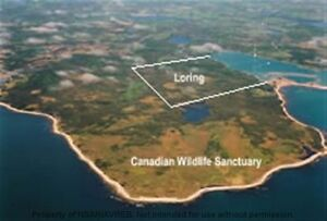 Own 100 Acres with 1500 Feet of Oceanfront