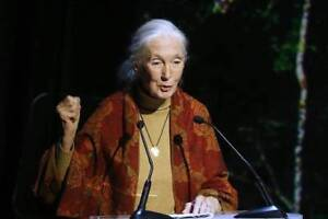 Wanted: Dr. Jane Goodall Tickets @ Rebecca Cohn!