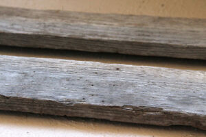 WANTED -weathered (barn) wood any size