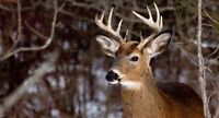 Land for 2015 fall hunt