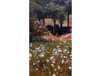 Gardening & Garden Maintenance Services - Hedges, lawns, on-site Chipping & Mulching, pressure wash