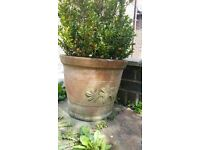 Assorted plant pots for sale from £4