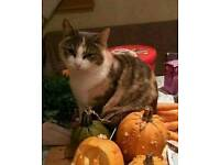 Missing cat Minou